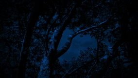 Trees In Strong Wind At Night. Trees sway on stormy night in the forest stock footage
