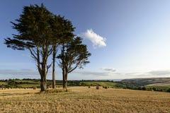 Trees and stubble near Looe coast, Cornwall Stock Photo