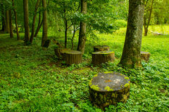 Trees and stumps in the park Stock Photo