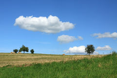 Trees and Summer field. Summer filed with the groups of trees, blue sky and clouds Royalty Free Stock Images