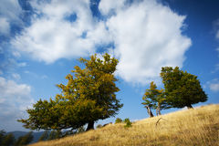 Trees in summer Stock Photography