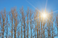 Trees with sun beam. Over blue sky stock images