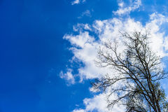 Trees in the sun on a blue sky. Stock Images