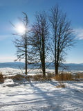 Trees and the sun in High Tatras Royalty Free Stock Photography