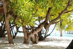 Trees on Sun Island Maldives beach Royalty Free Stock Photography