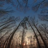 Trees. Sun setting in the wood Stock Photography