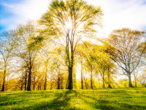 Trees with sun shining through Royalty Free Stock Photography