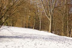 Trees, sun and snow - Elancourt, France. A forest was covered with snow, trees are surrounded with very white snow lit by the sunlight. Trees have no sheets, but Royalty Free Stock Photo