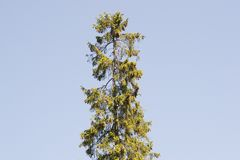 Trees sun Stock Image