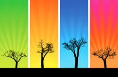 Trees and sunbeam Royalty Free Stock Photography