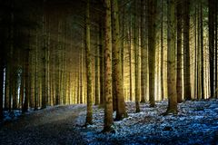 Trees with sunbeams in a forest stock image