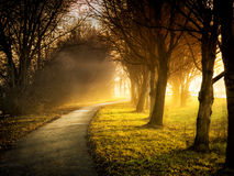 Trees with sunbeams. Image of a path with trees, meadows and sunbeams stock photo