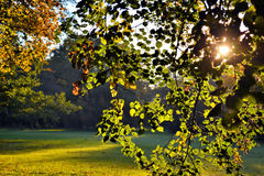 Trees in Sunlight. Trees in a park in sunlight Stock Photography