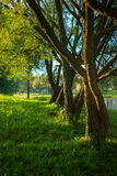 Trees in sunlight near pond Stock Photography