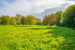 Trees in a sunny field below a blue cloudy sky at fall. Trees in a sunny field below a blue cloudy sky in autumn Stock Image