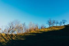 Trees on sunny hillside Royalty Free Stock Photography