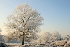 Trees in a sunny wintry landscape Royalty Free Stock Images