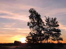 Trees in sunrise colors background Stock Photo
