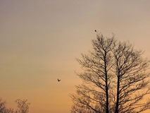 Trees in sunrise colors Royalty Free Stock Photos