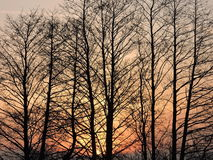Trees in sunrise colors Stock Images