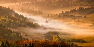 Trees sunrise fog Royalty Free Stock Photo