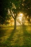 Trees at sunrise stock image