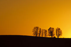 Trees at Sunrise Royalty Free Stock Photo