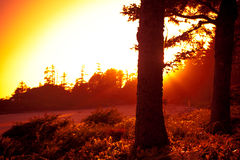 Trees at Sunset. Sunset peaking through the trees Royalty Free Stock Photo