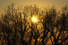 Trees at sunset Stock Photography