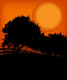 Trees in the sunset. Kind of Urban Art Tree in the sunset between black and orange color Royalty Free Stock Images
