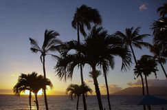 Trees at sunset. Palm trees at the end of the day Royalty Free Stock Photography