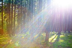 Autumn German forest with sun beam. Royalty Free Stock Photos