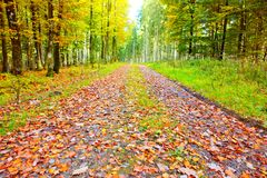 Autumn German forest with sun beam and road. Stock Images