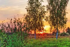 Trees on sunset background Royalty Free Stock Image