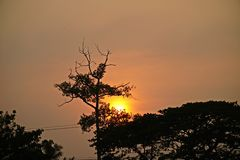 Trees with sunset background. royalty free stock images