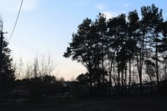 Trees during sunset. Beautiful weather and day Stock Images