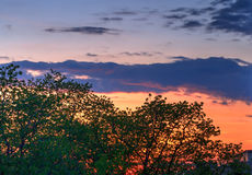 Trees at sunset Royalty Free Stock Image