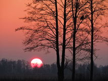 Trees in sunset colors Royalty Free Stock Images