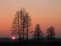 Trees in sunset colors Royalty Free Stock Photo