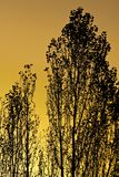 Trees at sunset Royalty Free Stock Photos