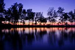 Trees in sunset Stock Images