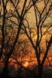 Trees at Sunset Stock Photos