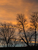 Trees in sunset Royalty Free Stock Photography