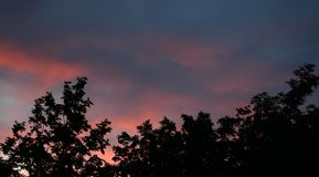 Trees at sunset stock photo