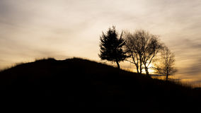 Trees at sunset. Tree standing at winter sunset stock image