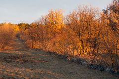 Trees at sunset. In trieste Royalty Free Stock Photos