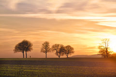 Trees at sunset with walker, Pfalz. Germany Royalty Free Stock Image