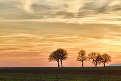 Trees at sunset with walker, Pfalz, Germany. Several trees at sunset with walker, Pfalz, Germany Royalty Free Stock Image