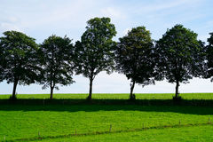 Trees in the sunshine Royalty Free Stock Image