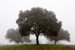 Trees surrounded by fog Royalty Free Stock Photography